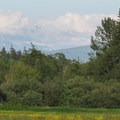 Mount Baker (10,781') from the River Dike Trail.- River Dike Trail