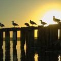 Sunset at Rio Del Mar State Beach.- Rio Del Mar State Beach