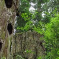 Natural birdhouses along the Bluff Trail.- Cama Beach State Park Loop Trails
