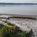 Looking out to Whidbey Island from Cama Beach.- Cama Beach State Park