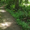 The Cross Island Trail links Cama Beach and Camano Island State Parks. - Cama Beach State Park