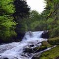 Alsea Falls.- Alsea Falls Recreation Area