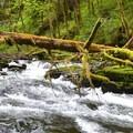 The beautiful South Fork of the Alsea River.- Alsea Falls Recreation Area