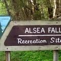 Alsea Falls Recreation Site.- Alsea Falls Recreation Area