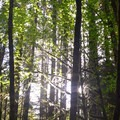 - Alsea Falls Recreation Area