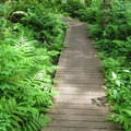 A short boadwalk passes over a marshy section.- Cranberry Lake
