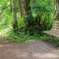 A trailside bench.- Cranberry Lake