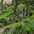 The mixed vegetation and rock create a wonderful visual appeal on the Rock Trail.- Rock Trail