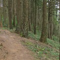 The hike begins by passing over a forested ridge.- Rock Trail