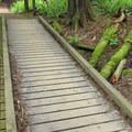 A small boardwalk on the lake loop. - Fragrance Lake Trail