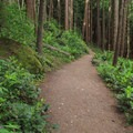 The first stretch passes through dense forest.- Fragrance Lake Trail