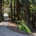 Buena Vista's tree diversity includes a small grove of redwoods.- Buena Vista Park