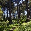 Trails thread through the forest on Buena Vista's slopes.- Buena Vista Park