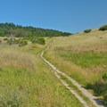 The trail through Pogonip Creek Nature Loop.- Pogonip Trails