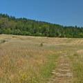 Open prairie at Pogonip.- Pogonip Trails