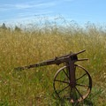 An old trailer hidden in the grass.- Pogonip Trails