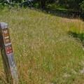 Ohlone Trailhead.- Pogonip Trails