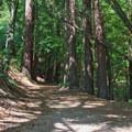 A walk through Bayshaw Trail.- Pogonip Trails
