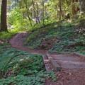Lime Kiln Trail.- Pogonip Trails