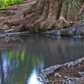 A bonus koi pond on the Pogonip trails.- Pogonip Trails