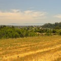 Field near the Club House overlooking Santa Cruz.- Pogonip Trails