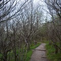 The trail through the thick rhododendrons is well maintained.- Craggy Pinnacle