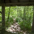 Looking out of the gazebo at Craggy Gardens.- Craggy Gardens