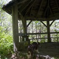 The gazebo likely once had a great panoramic view of the Blue Ridge Mountains, but the dense underbrush has since grown into the gap.- Craggy Gardens