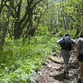 The trails are well maintained with moderate pitches.- Craggy Gardens