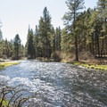 Metolius River at Camp Sherman Campground.- Camp Sherman Campground