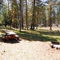 Typical campsite at Camp Sherman Campground.- Camp Sherman Campground