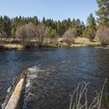 Metolius River from Allingham Campground.- Allingham Campground