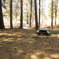 Typical campsite in Allingham Campground.- Allingham Campground