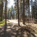 Allingham Campground.- Allingham Campground