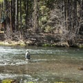 Angling in the Metolius River near Smiling River Campground.- Smiling River Campground