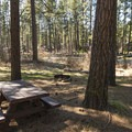 Typical campsite in Smiling River Campground.- Smiling River Campground