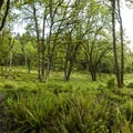 Oak restoration area along West Ridge Trail in Mount Talbert Nature Park.- Mount Talbert Nature Park