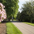 Rhododendrons on Peninsula Park's western edge.- Peninsula Park