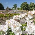Roses reign at Peninsula Park.- Peninsula Park