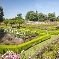 Peninsula Park's 2-acre rose garden.- Peninsula Park