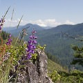 Stop on top of Heckletooth Mountain to enjoy the view and the wildflowers.- Salmon Creek  + Heckletooth Loop