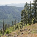 The precipitous trail down from the top of Heckletooth Mountain.- Salmon Creek  + Heckletooth Loop