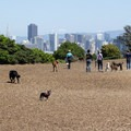 Off-leash dog area.- Corona Heights Park