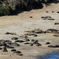 Elephant Seal Overlook.- Elephant Seal Overlook