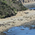 In winter the beach is full of adult females, juveniles, pups, and a handful of males.- Elephant Seal Overlook