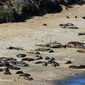 The Point Reyes Elephant Seal Overlook is located near Chimney Rock.- Point Reyes National Seashore