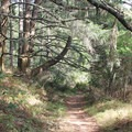 A forest path leading to Bass Lake from the Palomarin Trail.- Point Reyes National Seashore
