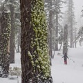 Rubicon offers a great storm skiing option.- Rubicon Peak