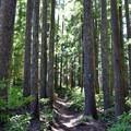The trail to Diamond Creek Falls.- Diamond Creek Falls
