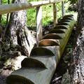 The log staircase leading to Diamond Creek Falls. - Diamond Creek Falls